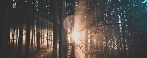 Alba tra gli alberi